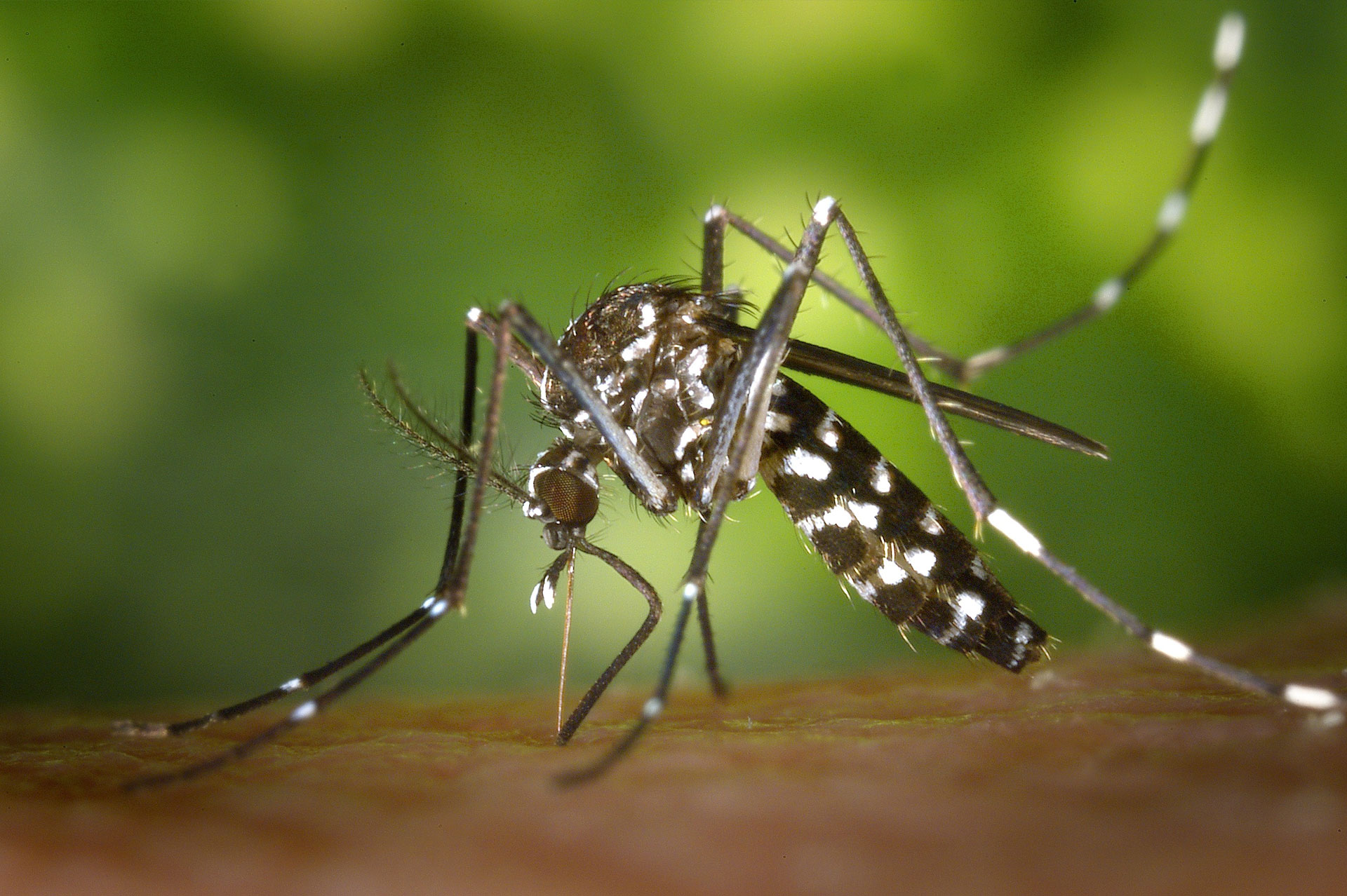Preventive steps to keep away mosquito-borne diseases